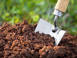 تغذیه گیاهی چیست؟،چالکوددرختان،کوددهی درختان میوه در پاییز،بهترین روش کوددهی در باغ چیست؟