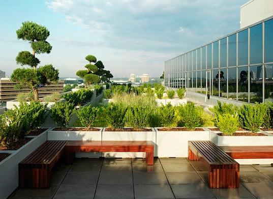 باغ بام-روف گاردن-گرین روف-بام سبز