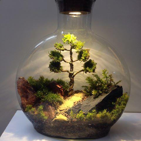 تراریوم یا باغ شیشه ای