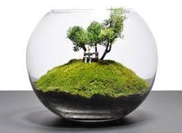 تراریوم،باغ شیشه ای،واریوم