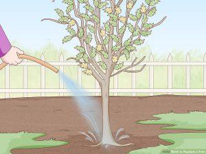 آبیاری درختان روتبالی