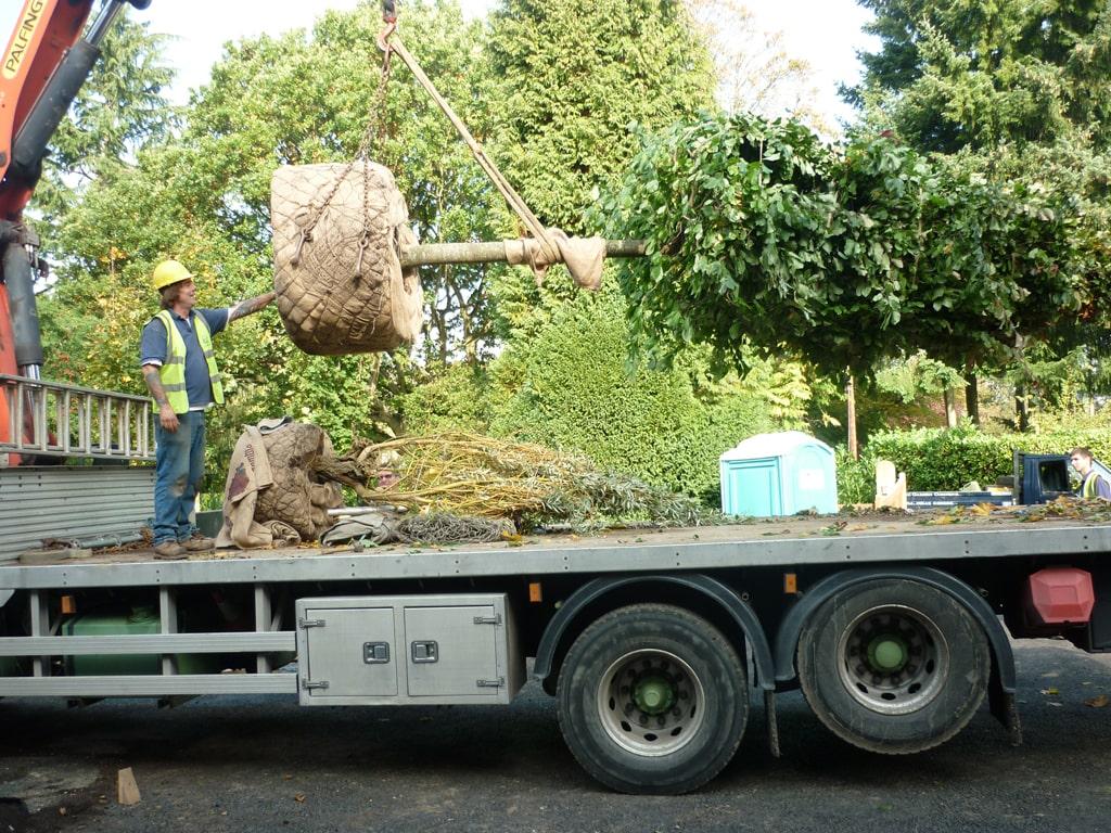 جابجایی درختان به روش روتبال