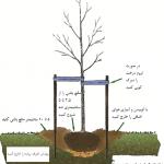 اصول کاشت درخت
