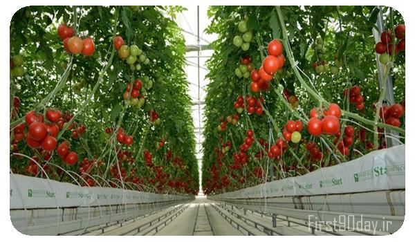 ساخت گلخانه هیدروپونیک